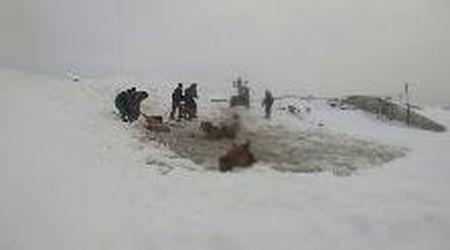 Russia, il ghiaccio è troppo sottile: i cavalli rischiano di annegare nell'acqua ghiacciata