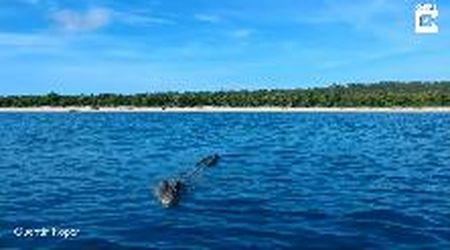 Australia, il drone lo infastidisce: il coccodrillo tenta di azzannarlo
