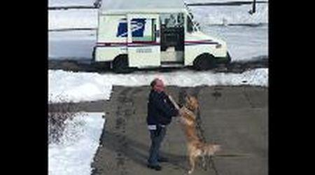 L'emozionante saluto del cane al postino: ogni giorno è una festa