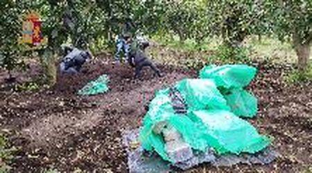 Gioia Tauro, mezza tonnellata di droga in giardino: arrestato il figlio del boss ergastolano Molè