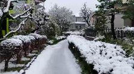 Incanto su Tokyo: la neve scende sui ciliegi in fiore