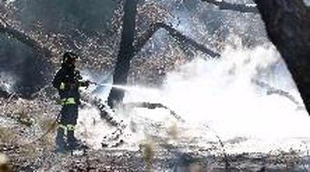 Lido Spina, rogo in pineta: vigili del fuoco al lavoro per ore