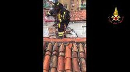 Trieste, i pompieri salvano un gabbiano