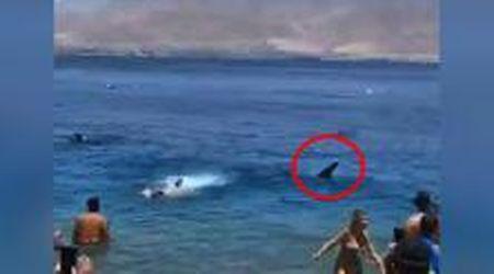 Israele, paura tra i bagnanti: c'è uno squalo a riva ma è innocuo