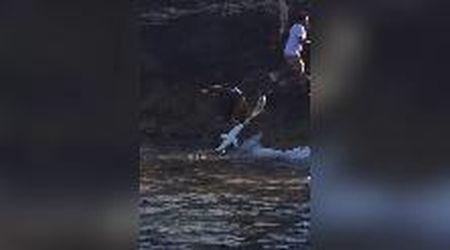 Puglia, con la canna da pesca sugli scogli: all'amo abbocca uno squalo