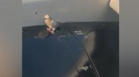 Londra, il vero piccione viaggiatore: resiste stoicamente sull'ala dell'aereo al decollo