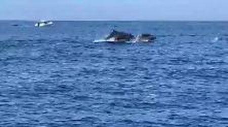 Sperlonga, la danza dei delfini: a decine attorno alla barca