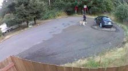 Stati Uniti, una donna abbandona il cane in un parco e fugge via: il momento ripreso in un video