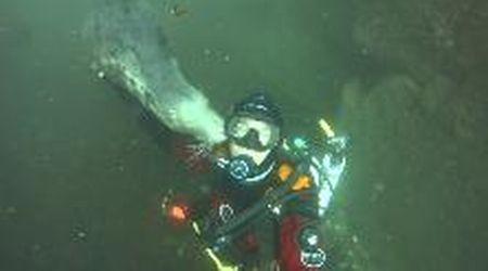 Mare del Nord, l'incontro ravvicinato tra la foca grigia e il sub: baci e tenerezze