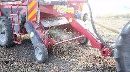 Torna l'arachide nei campi del Ferrarese. Filiera centrata su Bonifiche