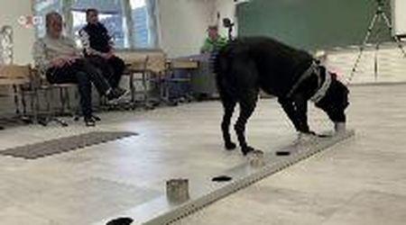 """Helsinki, i cani annusano chi ha il coronavirus: """"Precisi quasi al cento per cento"""""""