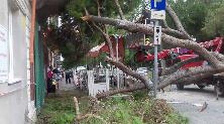 Viareggio, albero cade su una gelateria: ferita una cliente, un'altra sotto choc