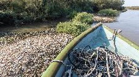 Codigoro, guisci di vongole e cozze intasano i canali