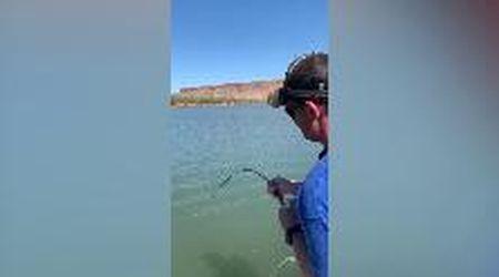 Australia, lo sforzo del pescatore: all'amo è finito a sorpresa un enorme predatore