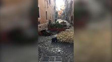 Trastevere, c'è il coprifuoco ma i vandali non si fermano: rovesciano vasi e piante