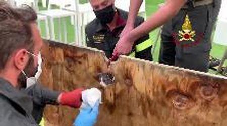 Verona, il gattino ha la testa incastrata in un buco: i vigili del fuoco intervengono per salvarlo