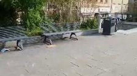 Allarme ratti in Campo San Giacomo, il video ne immortala uno