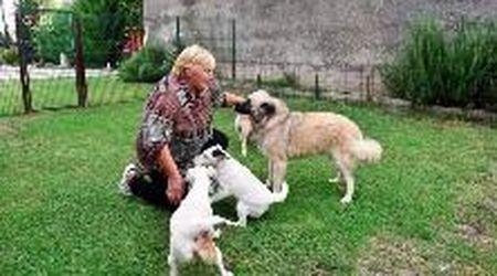La community che si occupa di cani anziani e ammalati