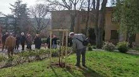Tre nuovi ciliegi piantati all'Opp di Trieste per festeggiare la nascita della nipotina in Giappone
