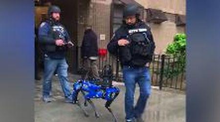 Il cane robot in azione con la polizia di New York: la scena come in Black Mirror