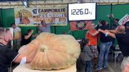 A Peccioli la zucca più grande del mondo: pesa 1.226 chili
