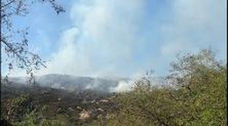 Incendio a Campo nell'Elba, a fuoco la vegetazione