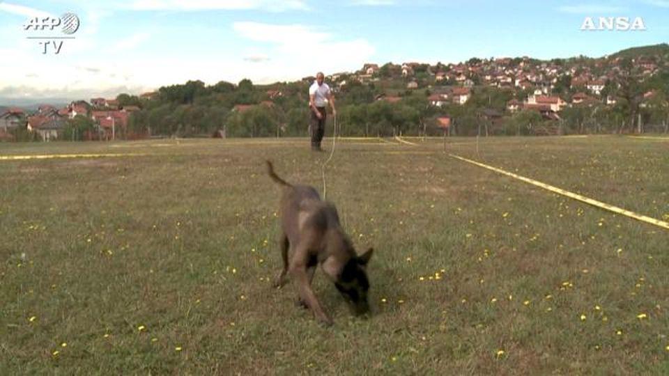 Bosnia, ecco come vengono addestrati i cani antimine: si siedono quando fiutano l'esplosivo