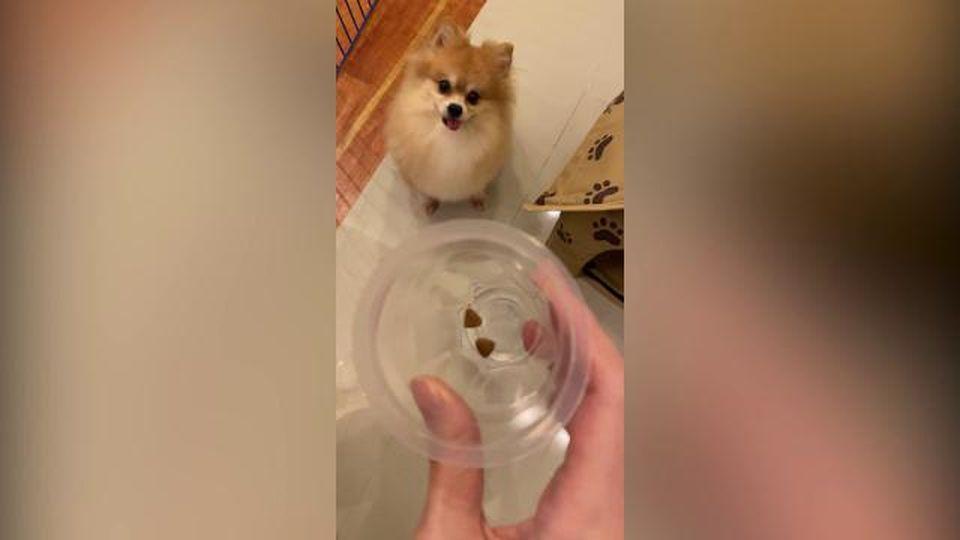 Il padrone mette nella ciotola solo due croccantini: la reazione del cane è esilarante