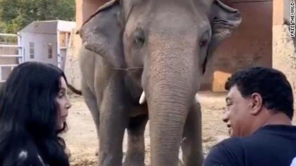 Cher canta per l'elefante più solo al mondo, la cantante rende Kaavan finalmente libero
