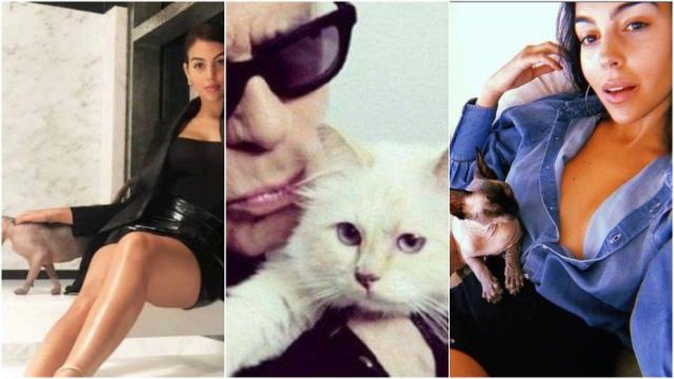 Il gatto di Ronaldo sta male e va in Spagna con jet privato: le 'follie' delle star per gli animali