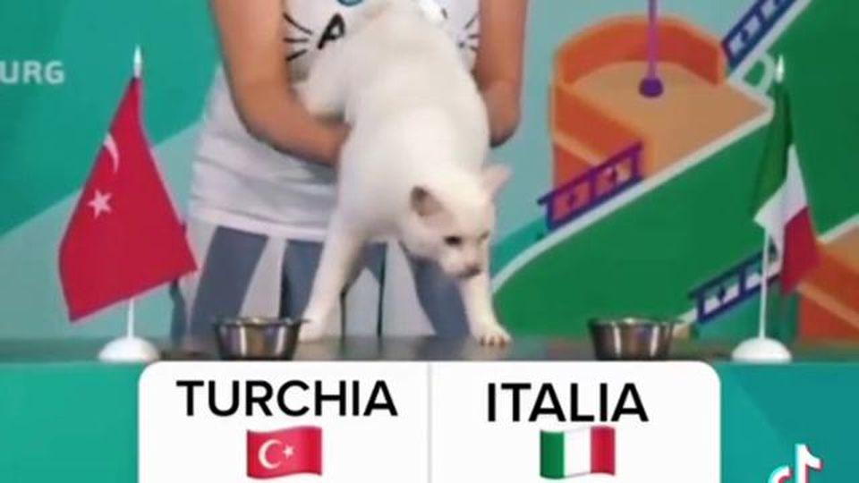 Euro 2020, il gatto (sordo) Achille aveva predetto la vittoria dell'Italia contro la Turchia