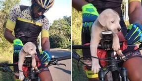 A cyclist sees an abandoned puppy dog on the roadside and changes his life
