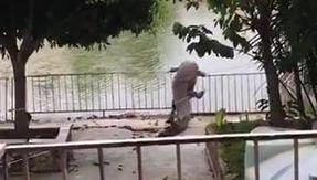 Inondazioni in Messico, nello stato di Tabasco, coccodrilli invadono le città: panico tra la popolazione