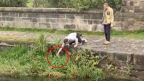 Un cane cade nel fiume, un passante lo vede e riesce a salvarlo
