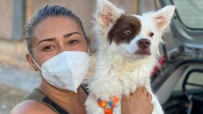 Lea, the dog hit in Lecce, has found a home thanks to La Zampa, despite his disability