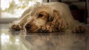 Sei anni dopo il rapimento, il cane, Bonnie, è tornato a casa della sua famiglia