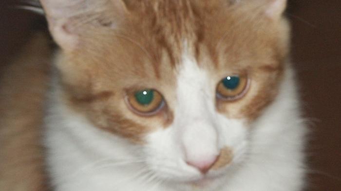 truffe pesce gatto dating migliori incontri chat room 2014