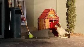 Messico, dipendenti di un supermercato adottano un cane randagio