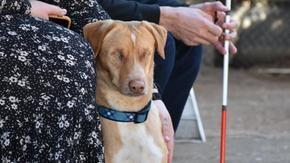 Louis, il cane non curato che è diventato cieco, è stato adottato da qualcuno che sta perdendo la vista