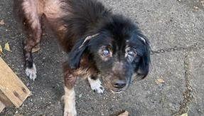 La historia del final feliz de Lucky, el perro desnutrido encadenado, ha encontrado un hogar