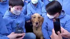 Coronavirus, per oltre 50 giorni un gruppo di medici si è preso cura di un cane smarrito: ora ha ritrovato la sua famiglia
