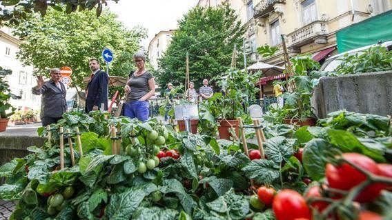 L'orto cresce in centro città a Torino - La Stampa