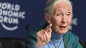 "Coronavirus, the primatologist Jane Goodall: ""The lack of respect for animals has caused the pandemic,"""