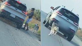 Cane Husky abbandonato nel deserto, il video del gesto crudele lo aiuta a trovare una famiglia adottiva