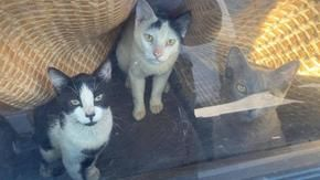 Rescued 24 cats locked in a car parked in the sun, without water and food