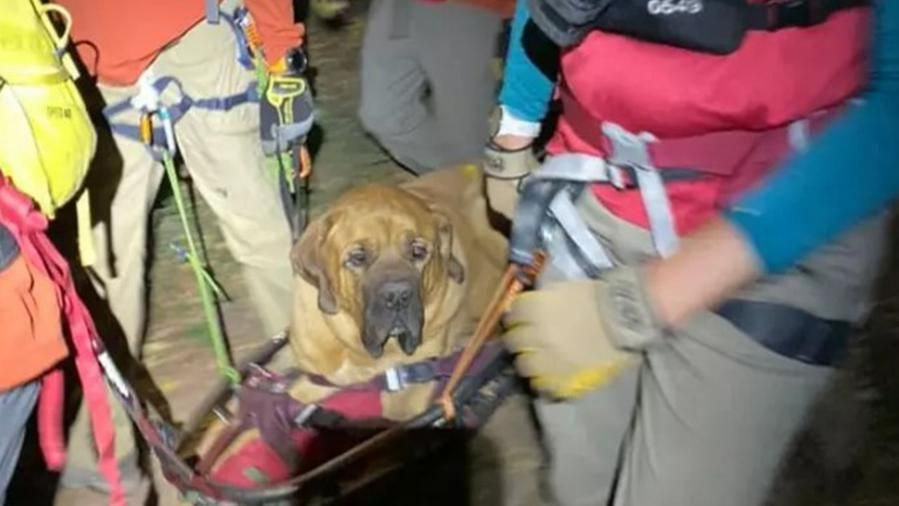 Troppo stanco per scendere dalla montagna, cane di 86 chili viene salvato insieme al suo proprietario