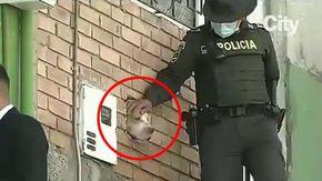 Un cane spunta con la testa da un buco nel muro di una casa abbandonata, i residenti danno l'allarme